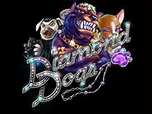 Diamond Dogs в клубе Чемпион