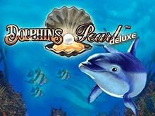 Dolphin's Pearl Deluxe в Чемпионе