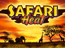В клубе Чемпион Safari Heat