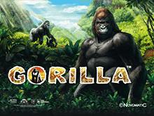 Новые игры в казино Вулкан — Gorilla