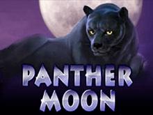 В казино Вулкан игровые Panther Moon